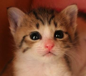猫にゃん 不動産査定